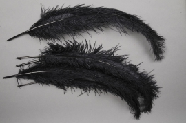 zl31ek Bag of 5 black ostrich feathers